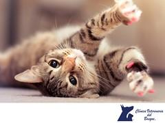 En CLINICA VETERINARIA DEL BOSQUE te recomendamos observar el lenguaje corporal de tu mascota 2 (tipsparamascotas) Tags: veterinariadelbosqueveterinariacuidadodemascotasmascotassaludablesesteticacaninaclinicaveterinariadelbosqueespecialistasencuidadodemascotaswwwveterinariadelbosquecomveterinariadelbosque veterinaria cuidadodemascotas mascotas mascotassaludables estticacanina delbosque