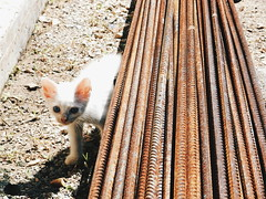 Textura, palpable textura. (leonardomuoz99) Tags: nikon coolpix p500 cato cachorro calle ojos mirada hierro oxido tierra blanco mamifero mamfero mascota discover animal nature nikoncoolpixp500 gato gatito