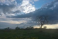 The tree of life (esmithiii2003) Tags: tree life outside clouds dusk sky treeoflife esmithiii houston woodlands thewoodlands texas republicoftexas republic esmithiii2003 sunset grass
