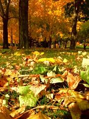 Autumn (Jamie Kerr) Tags: autumn fall leaves cruncy colorful beautiful closeup distance stick nature outdoors scenery photography lethbridge alberta nicolassheranpark walk adventure explore daytime sunshine