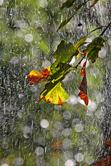 Autumn Throws A Party! (jrussell.1916) Tags: leaves autumn autumncolors yellow green orange waterdrops sprinkler bokeh canonef70200f4lis14tc