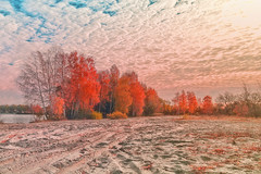 - (Alex-Bell) Tags: russia river tree voronezh city country sun surface sky light place