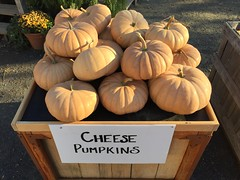 Terhune Orchards: Cheese Pumpkins (Triborough) Tags: nj newjersey mercercounty princeton terhune orchards pumpkin