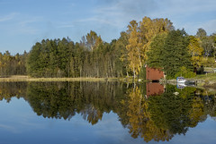 Autumn in Sweden -EXPLORED 22/10/2016- (PriscillaBurcher) Tags: autumn sweden ramns l1860261 explored