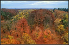 The autumn colors of 2015 seen from a watchtower (ronver1960) Tags: autumn fall woods forrest doorn netherlands holland november watchtower hdr