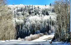 WINDS OF HEAVEN (Aspenbreeze) Tags: grandmesa grandmesacolorado colorado mesa snow frostytrees hoarfrost mixedforest forest road winter landscape mountains mountainlandscape rural country nature trees bevzuerlein aspenbreeze moonandbackphotography
