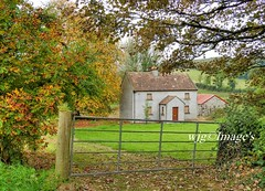 Abandoned country cottage, Oldcastle, Co. Meath. Ireland. (willieguildea) Tags: house cottage fore westmeath ireland eire country countryside nikon outdoor trees landscape farm tree yard plant