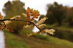 Autumnbeauty (azyef94) Tags: autumn autumnleaves naturelovers natureshot nature natur photography naturephotography nikonphotography flickrnature