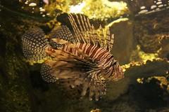 IMG_5709 (godpasta) Tags: newportaquarium kentucky newport aquarium