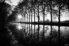 Reflection (fredf34) Tags: nb bw blackandwihte platanes canaldumidi france hérault canal pentax k3 pentaxk3 réflexion reflection péniches automne autumn bateaux béziers hdpentaxda1685mmf3556eddcwr fredf34 fredfu34 fredf boats barges arbres trees seul