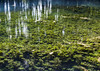 Crystal water 2 (Delfinibi) Tags: tata fényestanösvény hungary ungarn mzuiko magyarország zuiko water víz olympusepl5 olympus outdoor olympusm1442mmf3556iir epl5