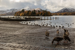 The Lake District (Daniel Mortimer) Tags: lake district england uk europe water cloud clouds ducks animals bird island tree trees brown grey mountain hill canon canon7dmarkii sigma wideangle