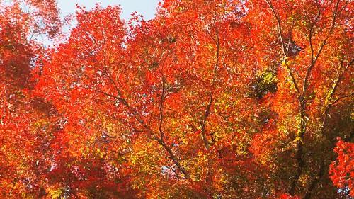 Foliage in Yoshino