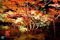 Tohoku 2016 - 503 (西文 Simon) Tags: 日本東北 miyagigun miyagiken 日本