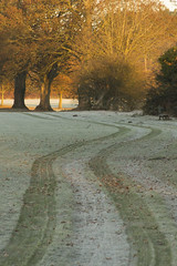 Tyre tracks in the frost (Dai Lygad) Tags: frost winter morning cardiff park dailygad jeremysegrott segrott flickr camera photo photograph photography picture image amateurphotography photos photographs images pictures caerdydd wales cymru britain