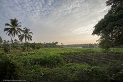 """God's Own Country"" (www.davidbaxendale.com) Tags: kerala india gods own country landscape dusk sunset magic hour"