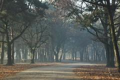 Verder. (limburgs_heksje) Tags: nederland niederlande netherlands noord brabant beekse bergen safaripark dierenpark