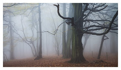 The Wait (Damian_Ward) Tags: photography damianward damianward oxfordshire trees chilterns chilternhills thechilterns fog mist