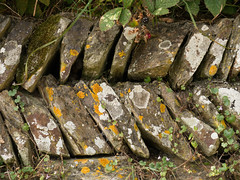 Life in a Cornish wall - original
