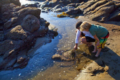 Tide Pools - Pismo Beach (pismobeachca) Tags: sealife pismobeach tidepools tidepool