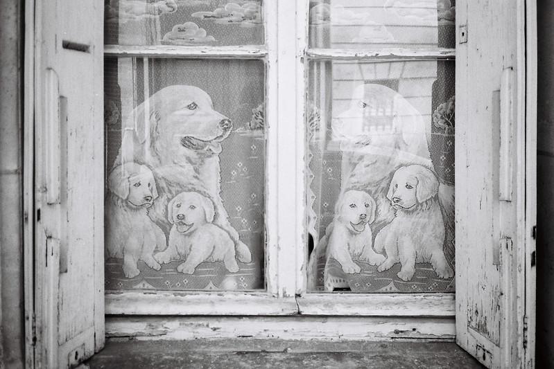 Doily Dogs.