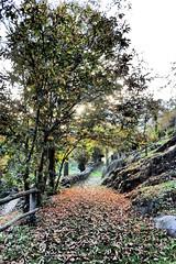 Capodiponte 3 (sandra_simonetti88) Tags: italien autumn italy fall leaves foglie way strada italia herbst autunno lombardia italie valcamonica vallecamonica incisionirupestri capodiponte
