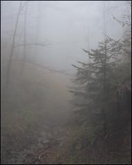 . (OverdeaR [donkey's talking monkey's nodding]) Tags: mountain nature misty fog creek 35mm landscape minolta sony mc dried f18 sonya a7 divcibare rokkor 3518 divčibare rokkorhh metabones
