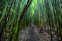 Narrow is the Way (RH Miller) Tags: usa green landscape hawaii maui bamboo trail hana bambooforest reedmiller rhmiller