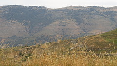 hills and valleys near Korthi IMG_8085 (mygreecetravelblog) Tags: mountain hill greece valley greekislands andros cyclades cycladesislands androsgreece androsisland korthi korthiou ormoskorthiou ormoskorthiouandros korthivillageandros korthiouandros