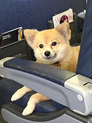 upgrade firstclass spoiled louisvuitton pampered petcarrier serviceanimal frequentflier