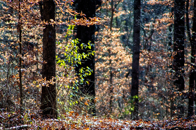 Hoosier National Forest - Springs Valley - November 14, 2015