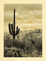 20151127_131250 R (C&C52) Tags: cactus nature landscape paysage extérieur phoneshot désert artnumérique