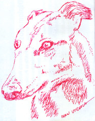 perro a lapicero (ivanutrera) Tags: dog animal pen sketch drawing perro draw dibujo ilustracion lapicero boligrafo dibujoalapicero dibujoenboligrafo