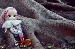 Cookie [ADAW 43/52] (Au Aizawa) Tags: xmas fashion japanese doll dal dotori dollmeeting