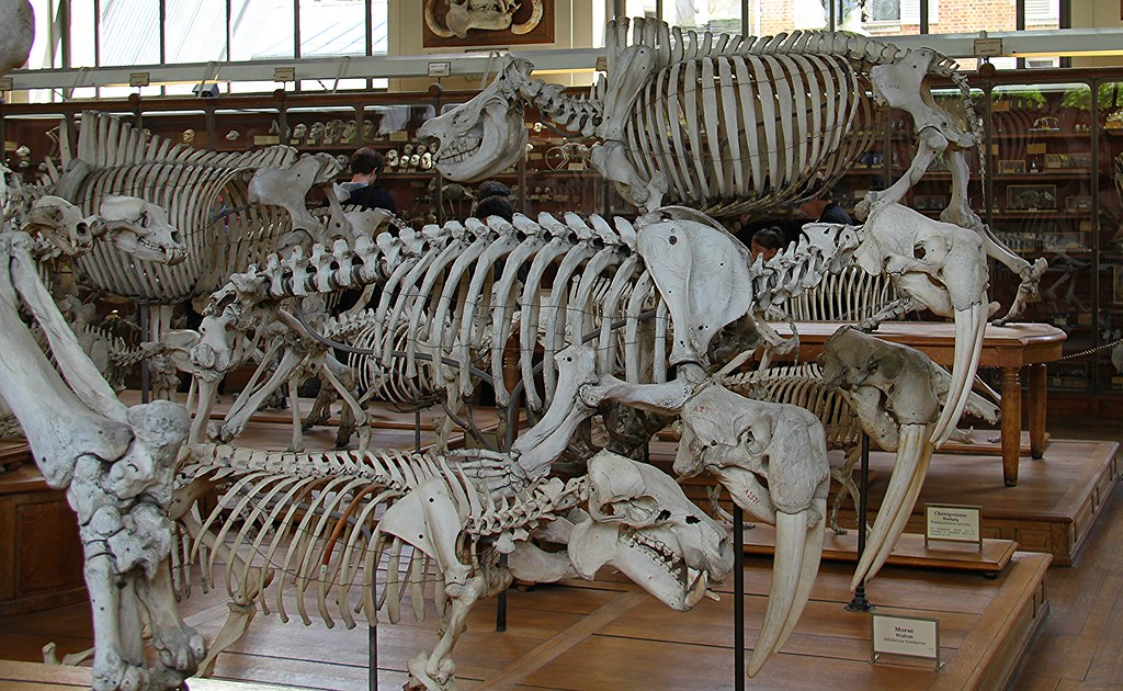 The World\'s newest photos of skull and walrus - Flickr Hive Mind