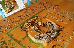 Mindboggler (judith511) Tags: tiger puzzle jigsaw odc resolve mindboggler