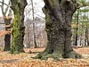 PC233391 - Fort Hill Park, Lowell, MA (Syed HJ) Tags: cemetery 35mm ma bokeh olympus fujian lowell lowellma lowellcemetery cctvlens epl2 fujian35mmf17 forthillpark olympusepl2 lowellcemeterylowellma fujian35mm forthillparklowellma