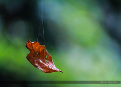 Fall Season (anishdebnath) Tags: dryleaf tripura agartala