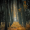 Bosque invernal (Inmacor) Tags: bosque inmacor invierno chopos winter paisaje landscape castellón arboles árbol hojas otoño tree trees tronco forest foret arbre autumn ltytr1 ltytr2