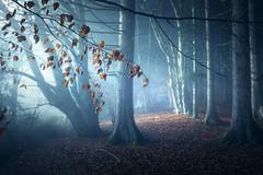 Treemendeous light (@hipydeus) Tags: autumn trees fog mist rays