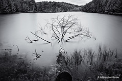 Water Spider (/ shadows and light) Tags: parcdelagatineau gatineauparc chelsea quebec bw monochrome longexposure trees water lakes dead