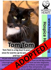 Tom-Tom got adopted! (Hospice Hearts) Tags: hospicehearts wwwhospiceheartsorg urbana champaign illinois il animalrescue nonprofit adopt adopted volunteer foster feline felines foreverhome family tomtom malcolm cat cats community help helping tux tuxie tuxedo