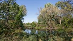 Washington Park (urbsinhorto1837) Tags: chicago landscape outdoors park washingtonpark water city nature urban