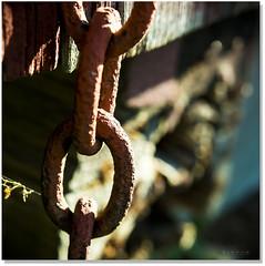 One Link At  A Time (Sigpho) Tags: sigpho nikon nice