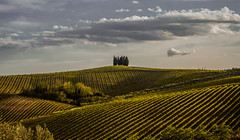 Cipressi (jazz_0902) Tags: cipressi tuscan tuscany trees toscana travel tuscanvineyards panoramic panoramica green vineyards clouds countryside campaign sky skyline