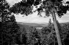 Evergreen, Colorado (electricthrift) Tags: trix 400tx kodak olympusxa colorado evergreencolorado