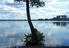 Am Wandlitzsee (kirstenreich) Tags: brandenburg wasser germany seen gewsser natur landschaften wandlitzsee wandlitz baum tree idylle ruhe erholung