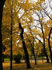 Frogner Park (rafareceputi) Tags: frognerparken vigelandsparken foliage fall autumn norway oslo