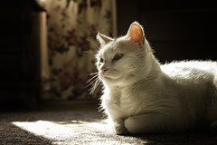 Zu (katarzynaadamczyk) Tags: cat pet animal autumn garden canon sigma sigma1750 canon550 orange