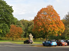 5108 Sycamore autumn colour at Plas Newydd (Andy - Daft as a brush - don't ask!) Tags: 20161021 aaa autumncolour brynsiencyn ccc cymru nationaltrust northwales ooo orange plasnewydd red rrr sss sycamore tree ttt